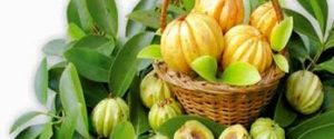 Healthy Life Garcinia Cambogia France - les composants - le site officiel