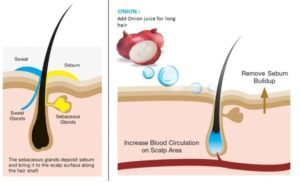 Hair revital x - avis - comment utiliser - sérum