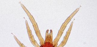 Breathe Clean Bite Mites - pour l'irritation de la peau - avis - forum - comment utiliser