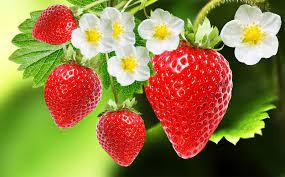 Home Berry Box - avis - forum - temoignage - composition